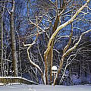 Backyard Trees Art Print