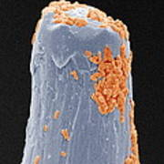 Bacteria On A Pin, Sem Art Print by Power And Syred