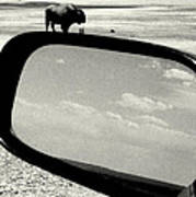 Badlands Bison Climbs Colossal Car Art Print