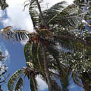 Bahamas Sky Art Print