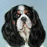 Bailey The Cavalier King Charles Spaniel Art Print