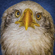 Bald Eagle 4 Art Print