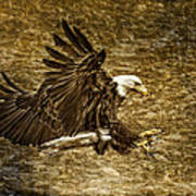 Bald Eagle Capture Art Print
