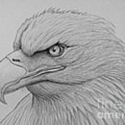 Bald Eagle Drawing Art Print