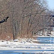 Bald Eagle Fledgling Near Ludwig Mill 2576 Art Print
