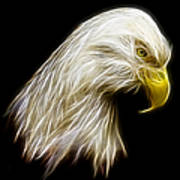 Bald Eagle Fractal Art Print