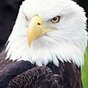 Bald Eagle - Power And Poise 04 Art Print