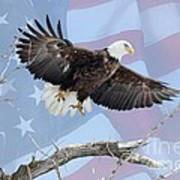 Bald Eagle Touch Of Pride Art Print