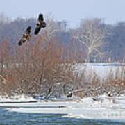 Bald Eagles At Providence Dam 1107 Art Print