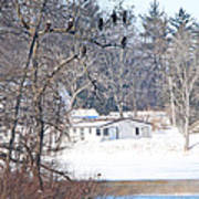 Bald Eagles In Tree In Grand Rapids Ohio 3996 Art Print