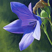 Balloon Flower Art Print by Alecia Underhill
