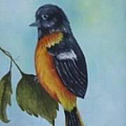 Baltimore Oriole Art Print