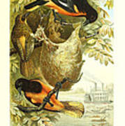 Baltimore Orioles Art Print by Philip Ralley