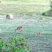 Bambi And The Twins  Art Print