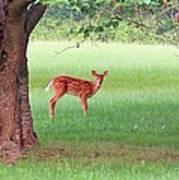 Bambi Days Art Print
