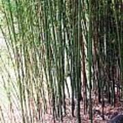 Bamboo By Roadsides Cherry Hill Roadside Greens            Art Print