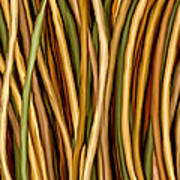 Bamboo Canes Art Print