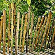 Bamboo Fencing Art Print by Lilliana Mendez
