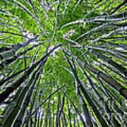 Bamboo Forest Art Print