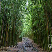 Bamboo Forest Trail Hana Maui Print by Dustin K Ryan