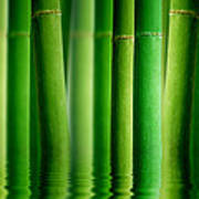 Bamboo Forest With Water Reflection Art Print