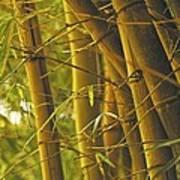 Bamboo Gold Art Print