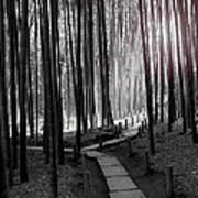 Bamboo Grove At Dusk Art Print