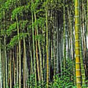 Bamboo Hill Art Print