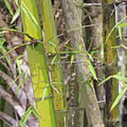 Bamboo I Poster Look Art Print
