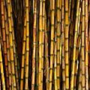 Bamboo Art Print by Jacqui Collett