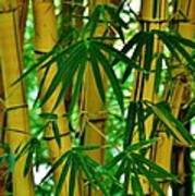 Bamboo Of Hawaii Art Print
