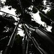 Bamboo Skies 3 Art Print