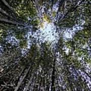 Bamboo Sky Art Print