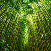 Bamboo Sky - The Magical And Mysterious Bamboo Forest Of Maui. Art Print
