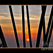 Bamboo Sunset - Black Frame Art Print
