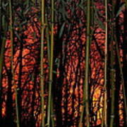 Bamboo Sunset Art Print by Sharon Costa