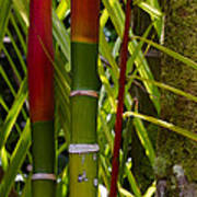 Bamboo Too All Profits Go To Hospice Of The Calumet Area Art Print