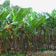 Banana Field Art Print