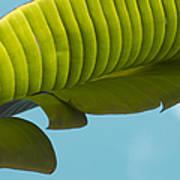 Banana Leaf And Maui Sky Art Print