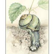 Banded Garden Snail  Art Print