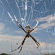 Banna Spider Art Print