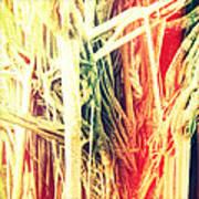 Banyan Tree Art Print by Chris Andruskiewicz