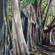 Banyan Trees Art Print by Karol Wyckoff
