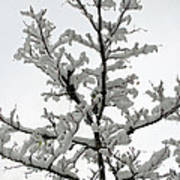 Bare Branches With Snow Art Print