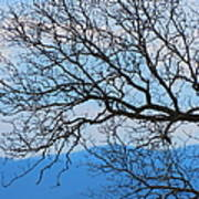 Bare Tree Against Blue Sky Art Print