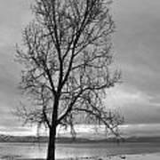 Bare Tree On A Wintery Tahoe Shoreline Art Print