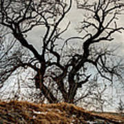 Bare Tree On The Hill Art Print