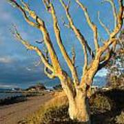 Bare Tree On The Spit Art Print
