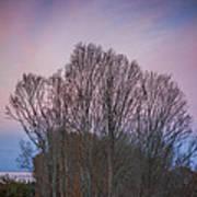 Bare Trees And Autumn Sky Art Print
