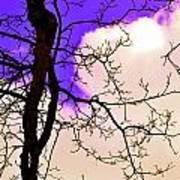 Bare Winter Branches Art Print